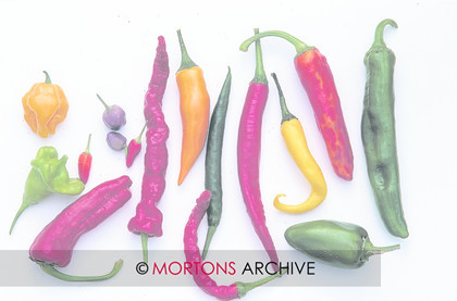 Chilli Collections 003 