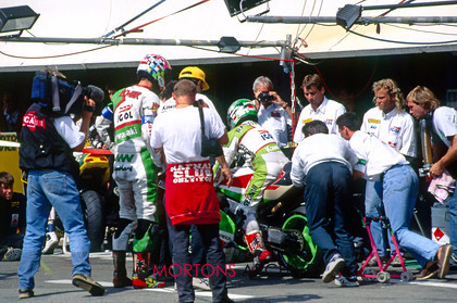 Bol Dor 03 