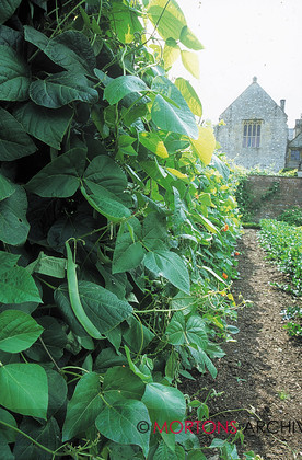 96 Talk veg Apr 2 
